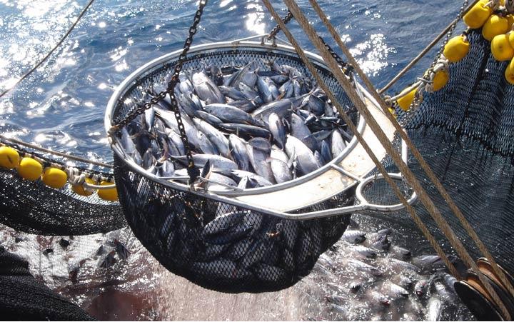 Control de la actividad pesquera de un buque